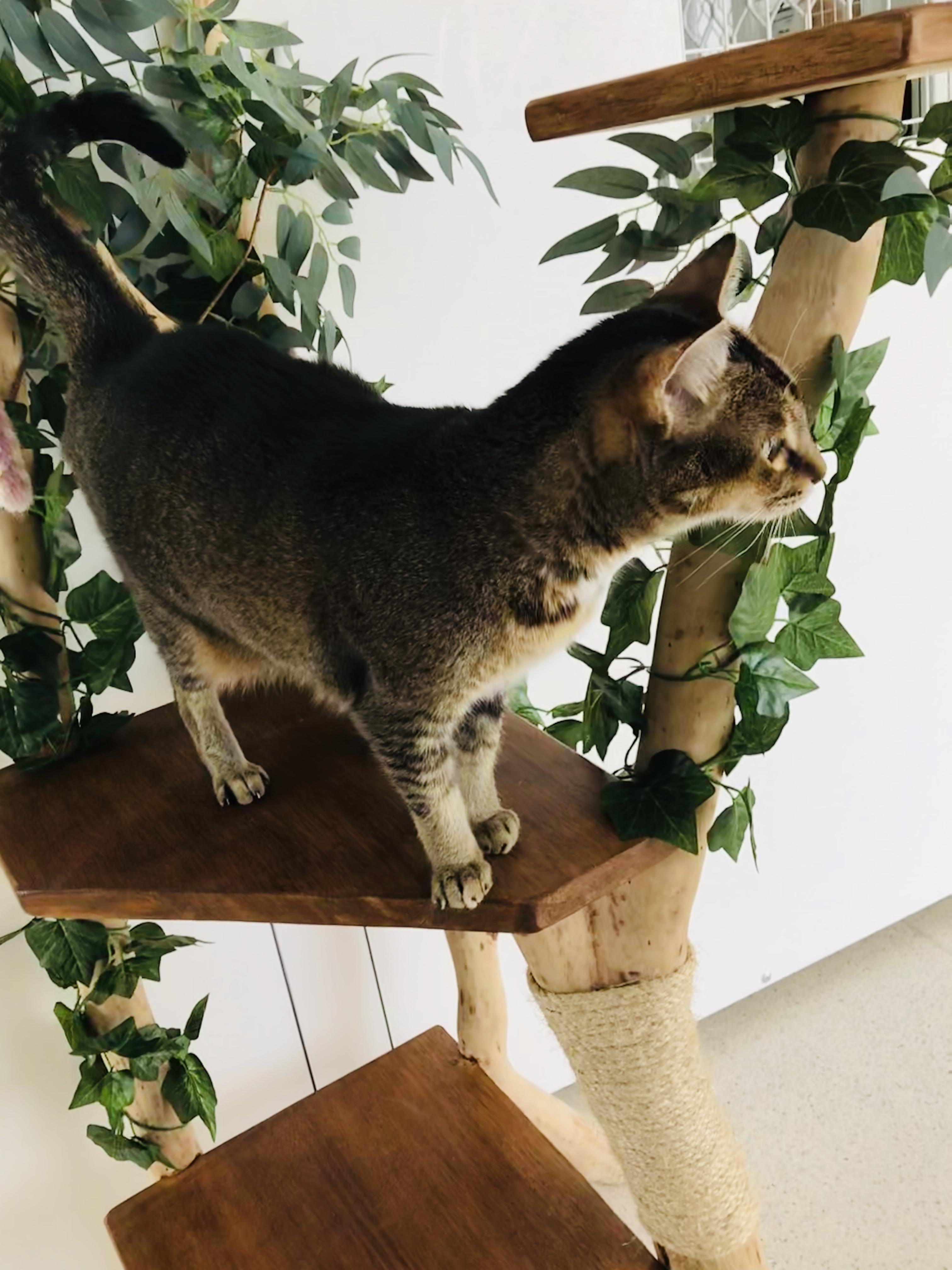Toowoomba Cattery